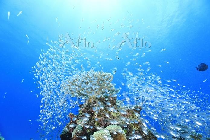 沖縄県 魚の群れ