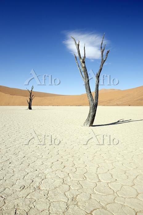 Namibia, Namib desert, Namib-N・・・