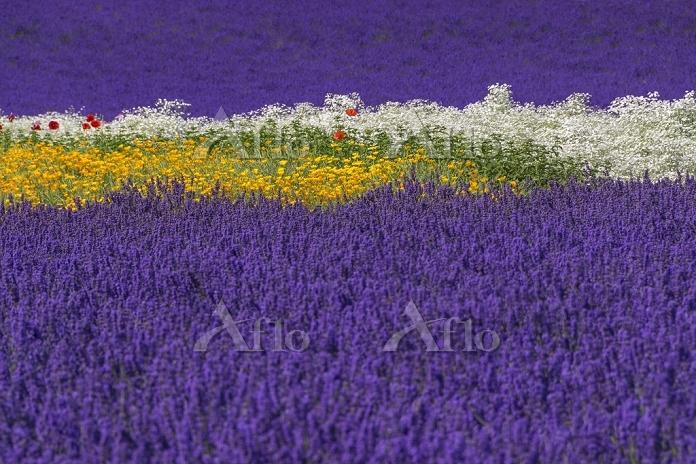 カラフルな花々の絨毯