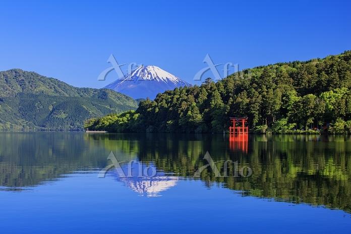 神奈川県 新緑の芦ノ湖と富士山 春