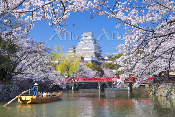 兵庫県 桜咲く姫路城と内濠