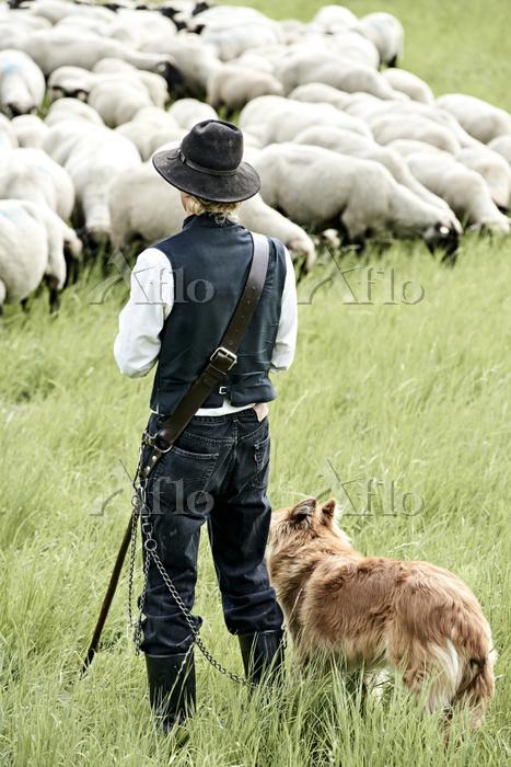 羊飼いの番犬