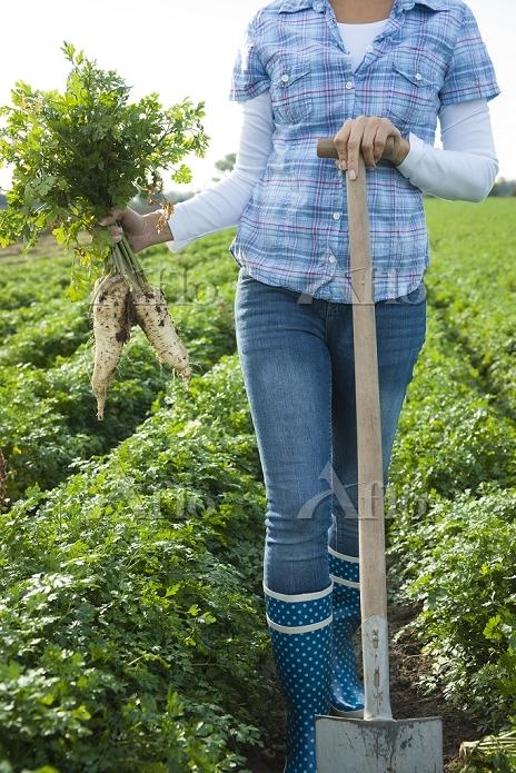 Woman harvesting radish