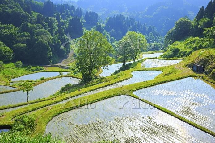 新潟県 朝の蒲生の棚田と新緑の山並み