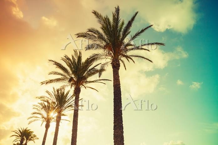 Palm trees and shining sun ove・・・