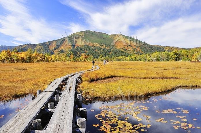 群馬県 尾瀬 上田代から望む池塘と紅葉の至仏山