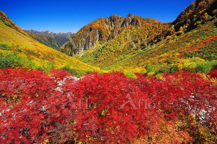 長野県 上高地 涸沢 ナナカマドの紅葉