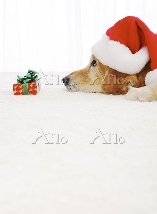 動物 プレゼント 見つめる