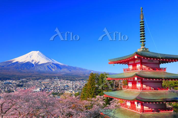 山梨県 新倉山浅間神社の桜と富士山