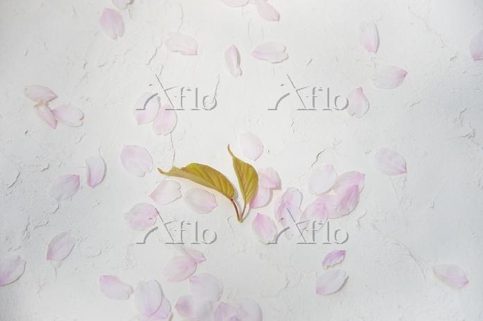 桜と花びら