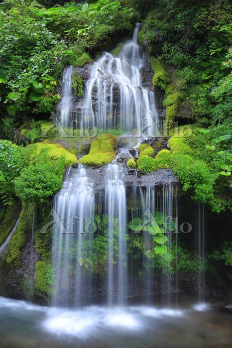山梨県 北杜市 川俣川渓谷 吐竜の滝