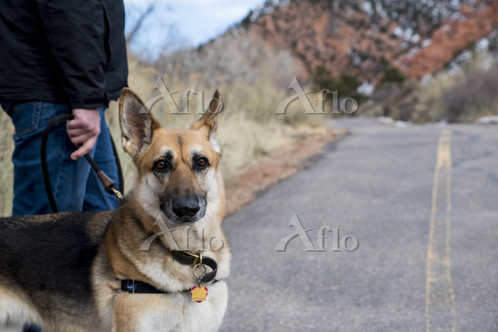 Portrait of dog with man on co・・・