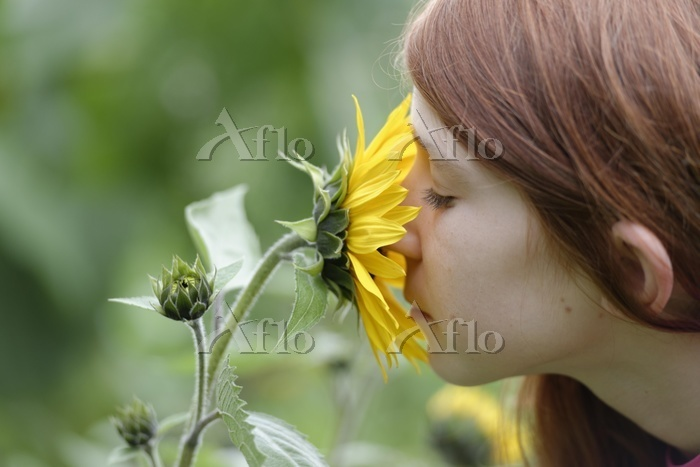 Girl smelling a Sunflower (Hel・・・