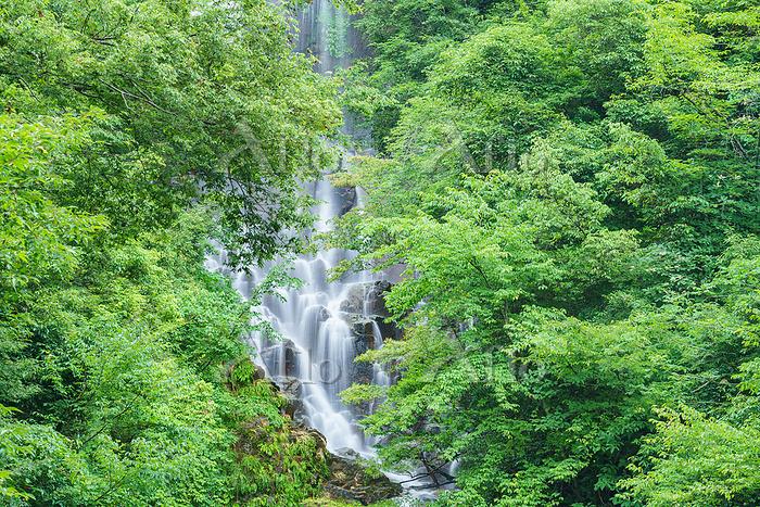 広島県 常清の滝