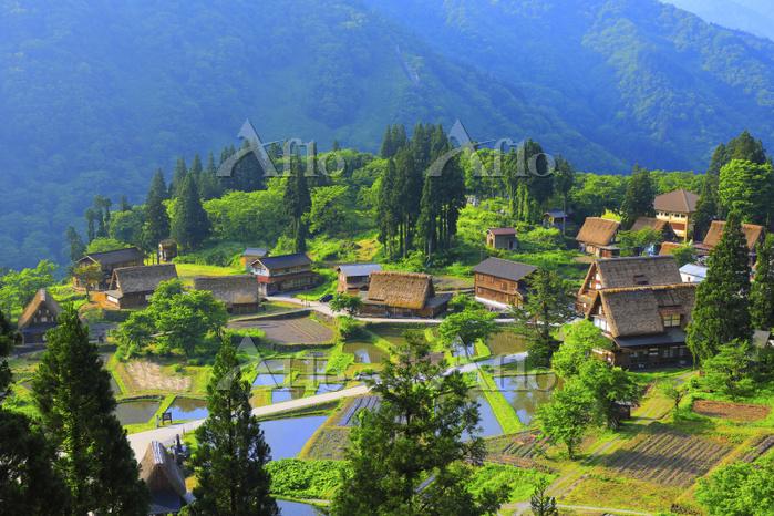 富山県 朝の五箇山相倉合掌造り集落と水田